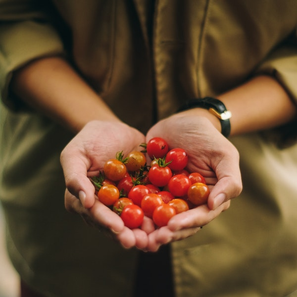 bahçe-domates
